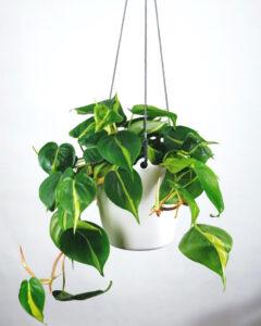 Titelbild-Unser-erstes-Projekt-Automatische-Pflanzenbewaesserung